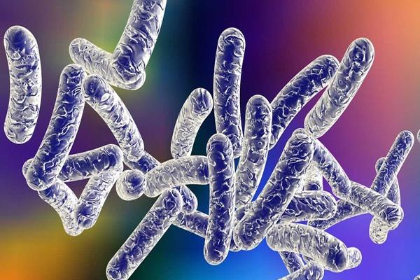Legionella Bakteri mematikan di Bali